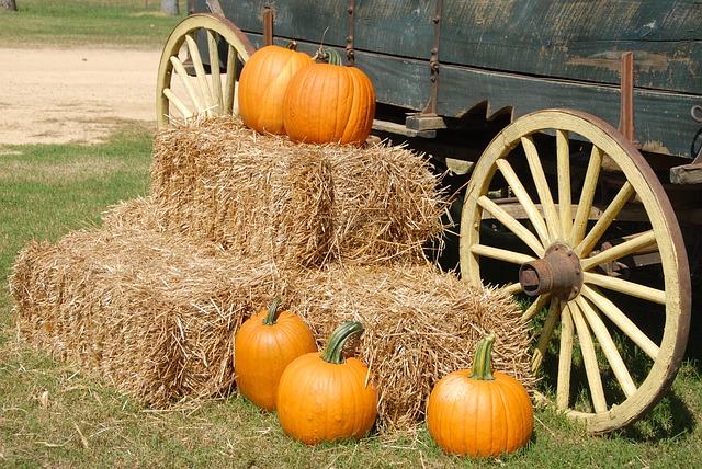 Enjoy Some Autumn Agritainment at Clark's Elioak Farm